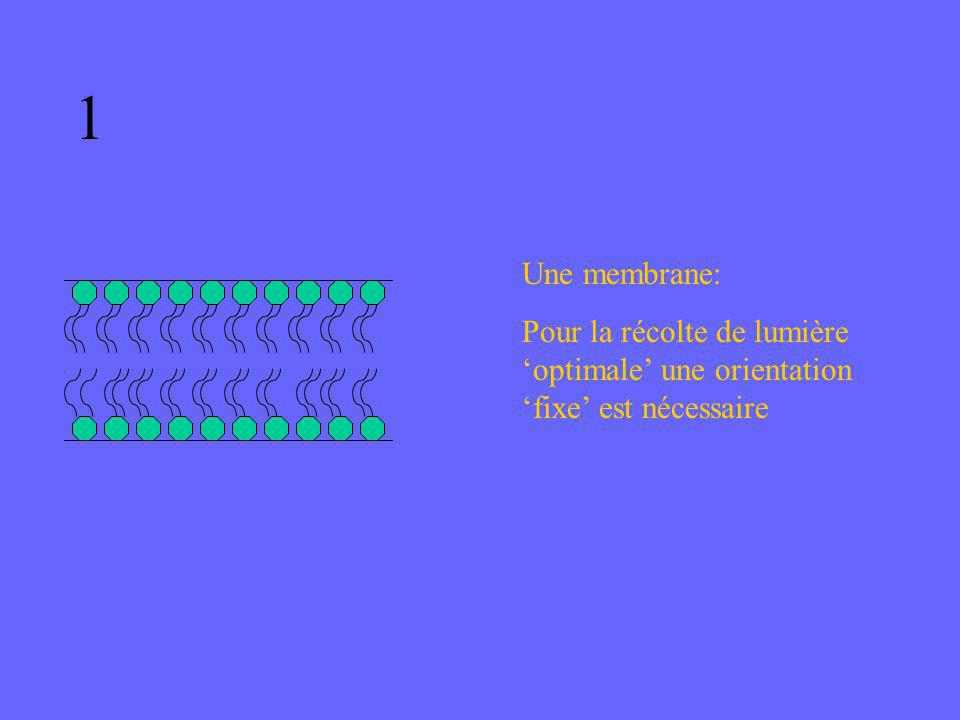 Une membrane: Pour la récolte de lumière optimale une orientation fixe est nécessaire 1