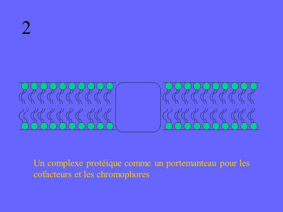 2 Un complexe protéique comme un portemanteau pour les cofacteurs et les chromophores