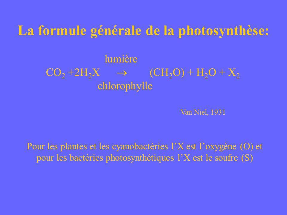 La formule générale de la photosynthèse: lumière CO 2 +2H 2 X (CH 2 O) + H 2 O + X 2 chlorophylle Van Niel, 1931 Pour les plantes et les cyanobactérie