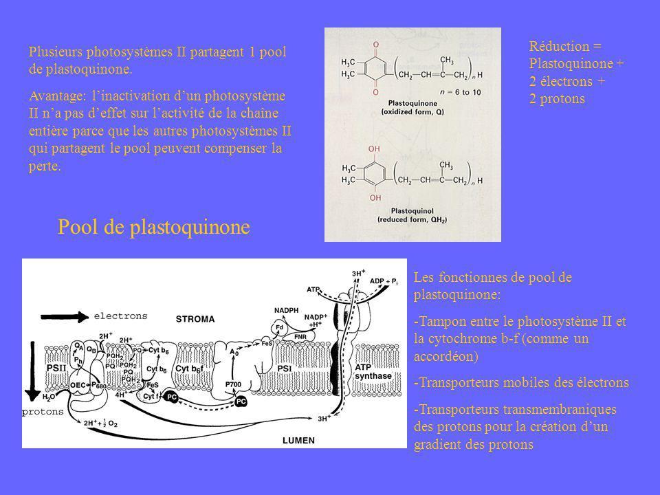 Réduction = Plastoquinone + 2 électrons + 2 protons Plusieurs photosystèmes II partagent 1 pool de plastoquinone. Avantage: linactivation dun photosys