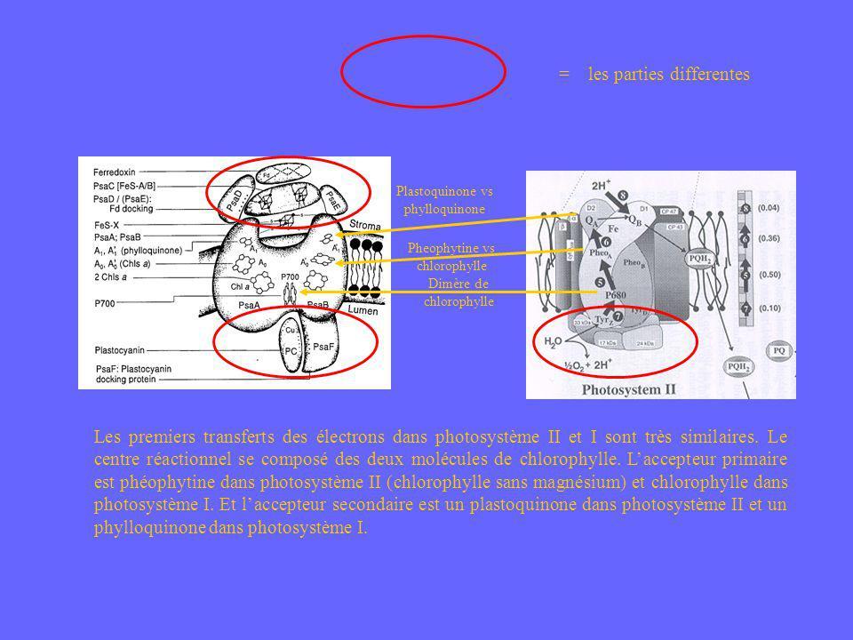Dimère de chlorophylle Pheophytine vs chlorophylle Plastoquinone vs phylloquinone Les premiers transferts des électrons dans photosystème II et I sont