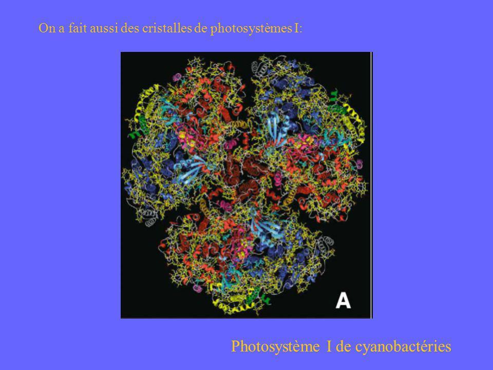Photosystème I de cyanobactéries On a fait aussi des cristalles de photosystèmes I: