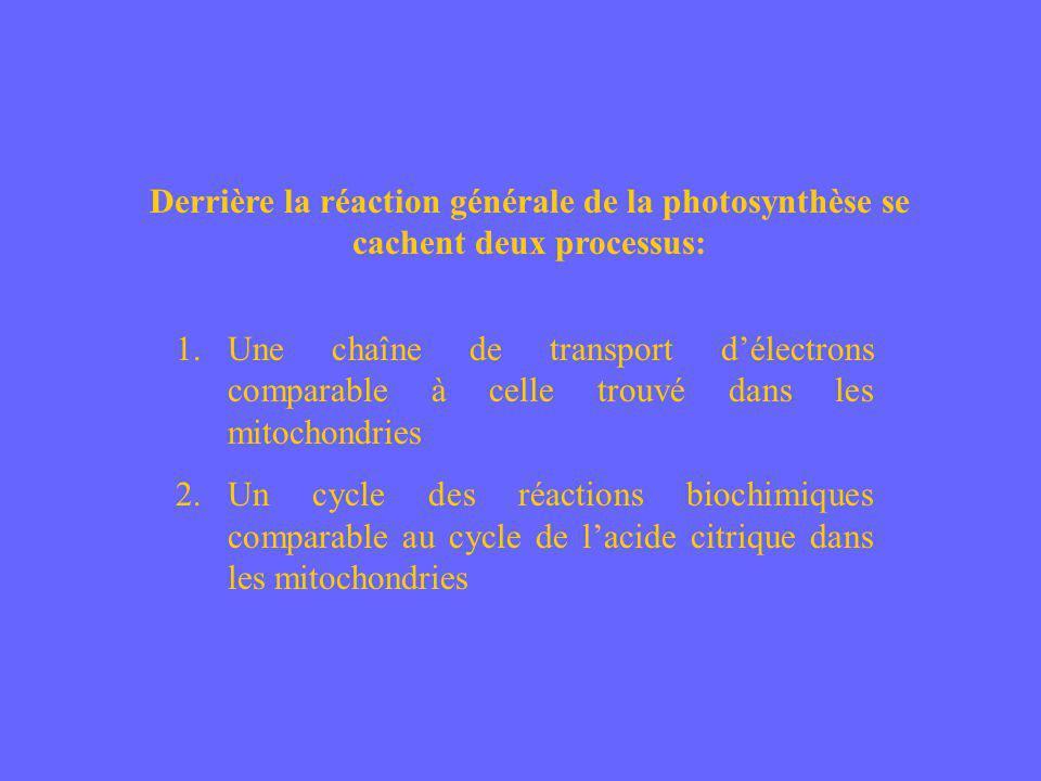 Derrière la réaction générale de la photosynthèse se cachent deux processus: 1.Une chaîne de transport délectrons comparable à celle trouvé dans les m