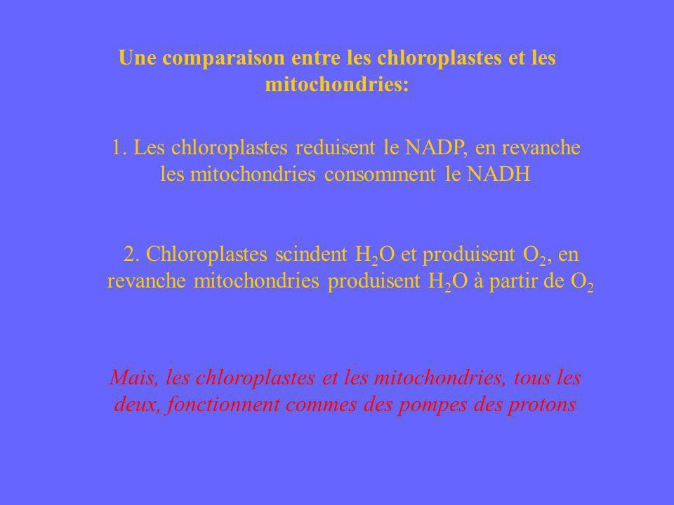 Une comparaison entre les chloroplastes et les mitochondries: 1. Les chloroplastes reduisent le NADP, en revanche les mitochondries consomment le NADH