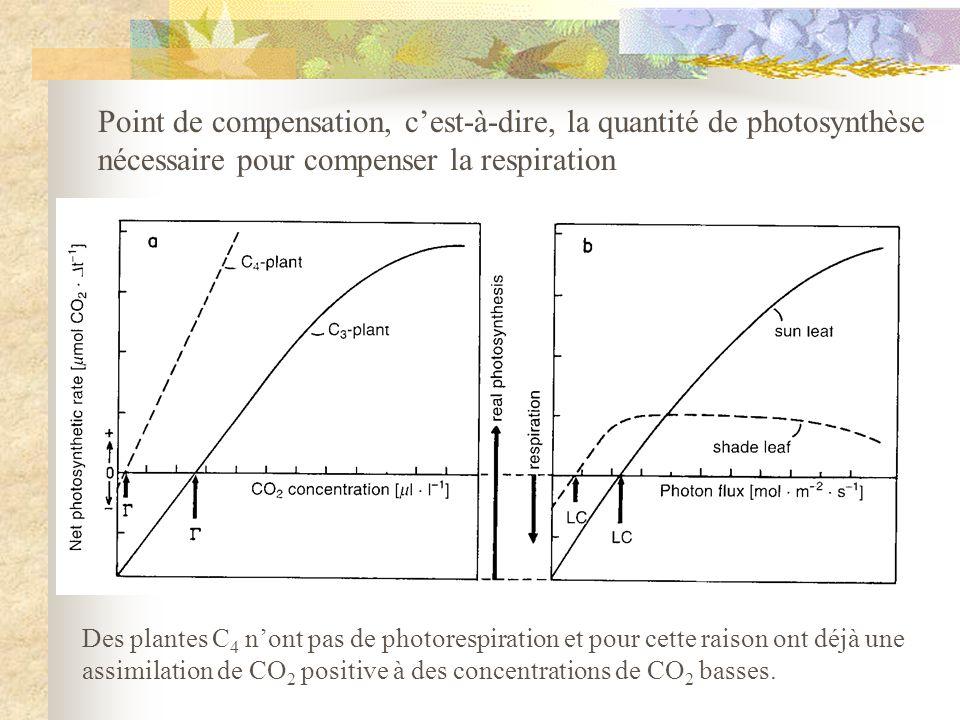 Point de compensation, cest-à-dire, la quantité de photosynthèse nécessaire pour compenser la respiration Des plantes C 4 nont pas de photorespiration