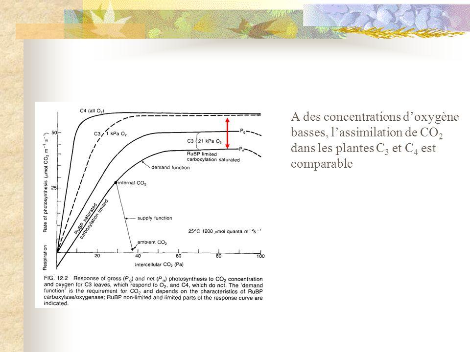 A des concentrations doxygène basses, lassimilation de CO 2 dans les plantes C 3 et C 4 est comparable