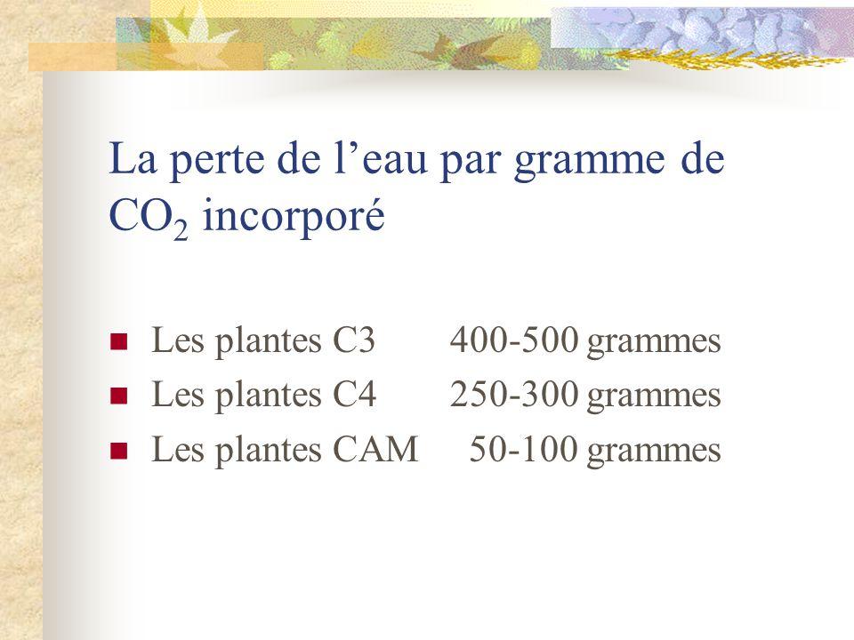 La perte de leau par gramme de CO 2 incorporé Les plantes C3400-500 grammes Les plantes C4250-300 grammes Les plantes CAM 50-100 grammes