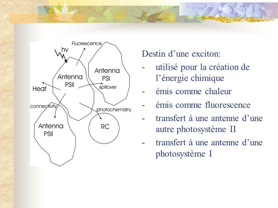 Destin dune exciton: -utilisé pour la création de lénergie chimique -émis comme chaleur -émis comme fluorescence -transfert à une antenne dune autre p