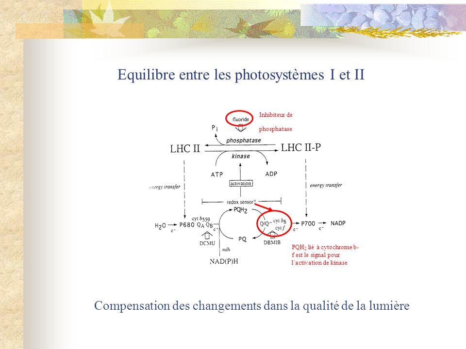 Equilibre entre les photosystèmes I et II Compensation des changements dans la qualité de la lumière Inhibiteur de phosphatase PQH 2 lié à cytochrome