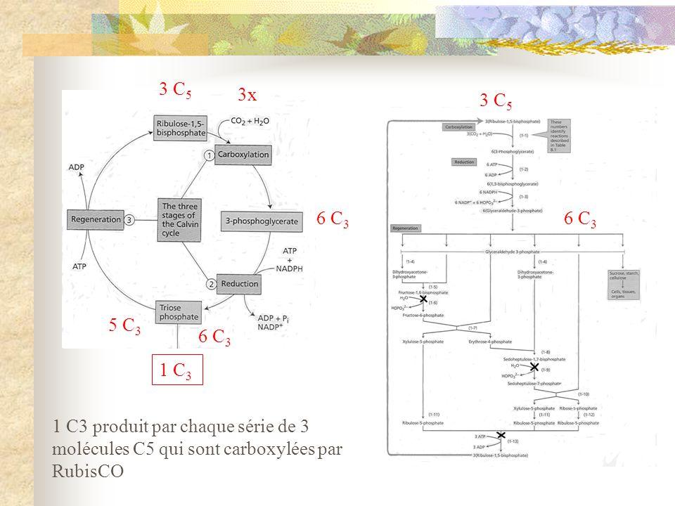 3 C 5 6 C 3 5 C 3 1 C 3 3x 6 C 3 3 C 5 1 C3 produit par chaque série de 3 molécules C5 qui sont carboxylées par RubisCO