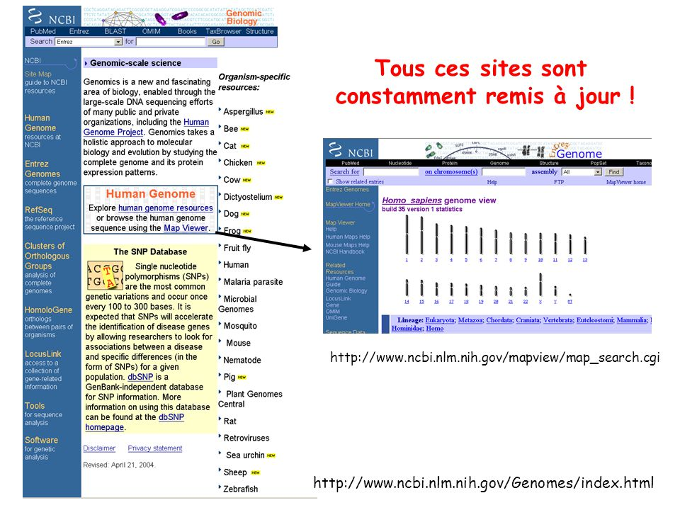 http://www.ncbi.nlm.nih.gov/Genomes/index.html Tous ces sites sont constamment remis à jour ! http://www.ncbi.nlm.nih.gov/mapview/map_search.cgi