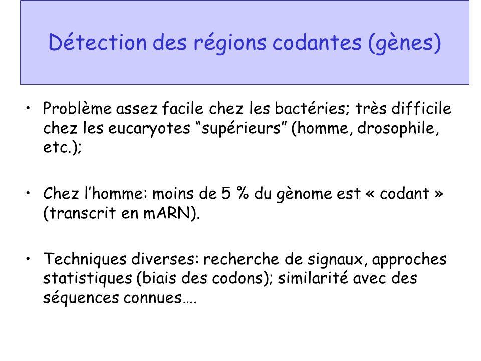 Détection des régions codantes (gènes) Problème assez facile chez les bactéries; très difficile chez les eucaryotes supérieurs (homme, drosophile, etc