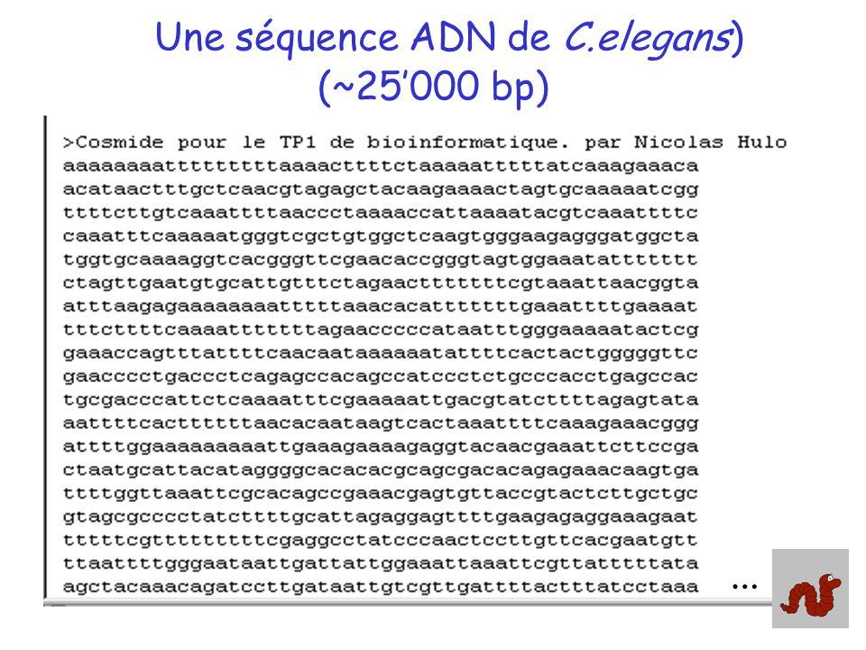 Une séquence ADN de C.elegans) (~25000 bp) …