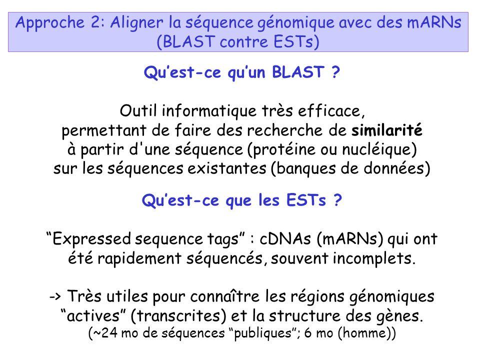 Quest-ce quun BLAST ? Outil informatique très efficace, permettant de faire des recherche de similarité à partir d'une séquence (protéine ou nucléique