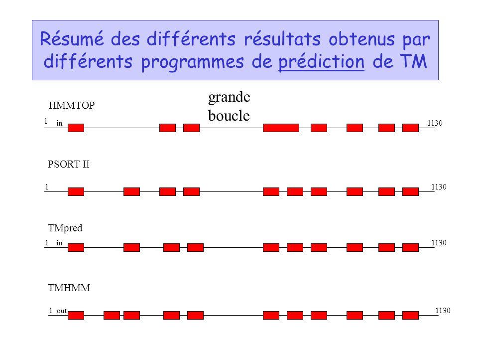 Résumé des différents résultats obtenus par différents programmes de prédiction de TM HMMTOP PSORT II TMpred TMHMM 1 1130 1 1 1 in out grande boucle