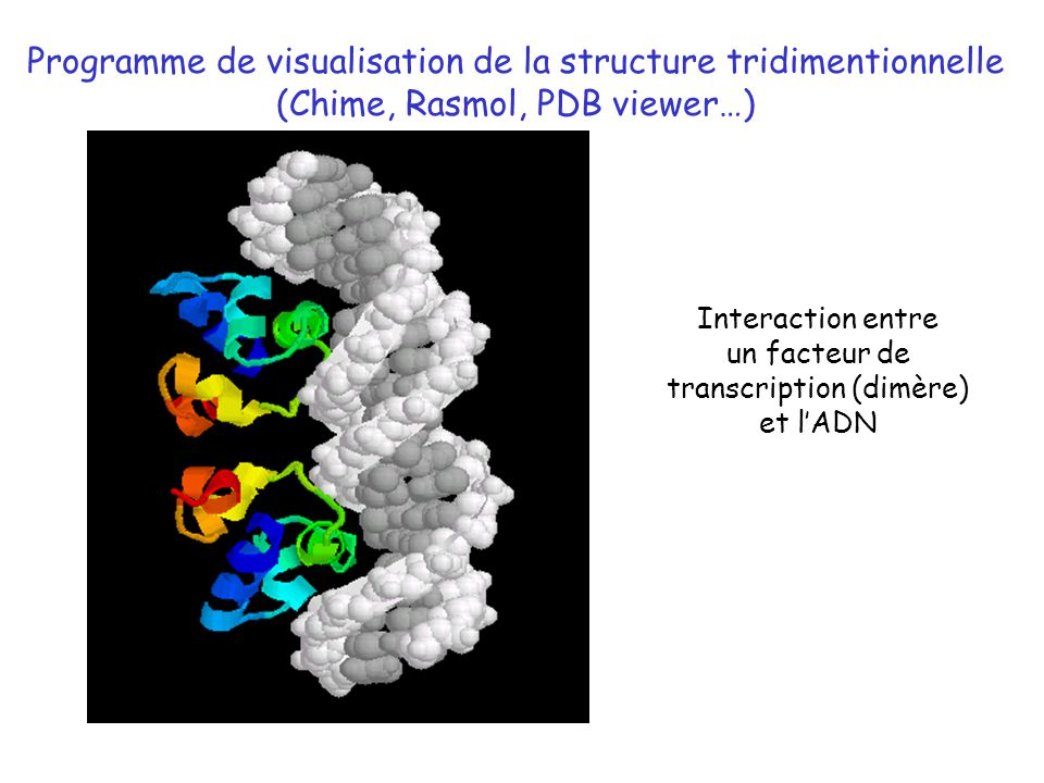 Programme de visualisation de la structure tridimentionnelle (Chime, Rasmol, PDB viewer…) Interaction entre un facteur de transcription (dimère) et lA