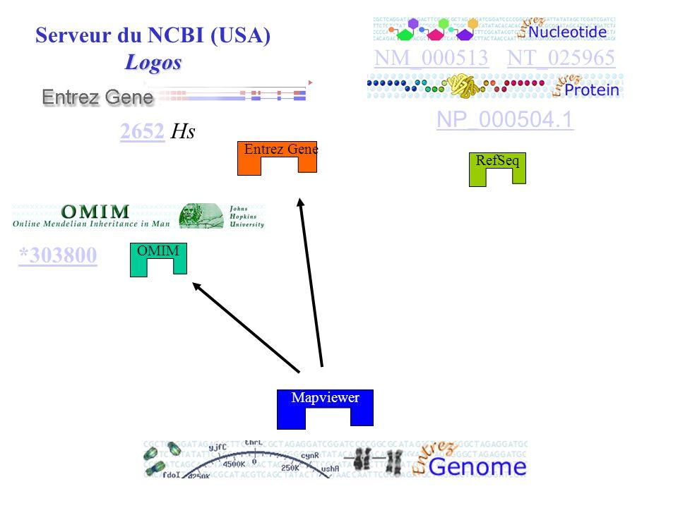 Moteur de recherche spécialisé OMIM Entrez Gene RefSeq Serveur du NCBI (USA)Logos Mapviewer 26522652 Hs *303800 NM_000513NM_000513 NT_025965NT_025965 NP_000504.1