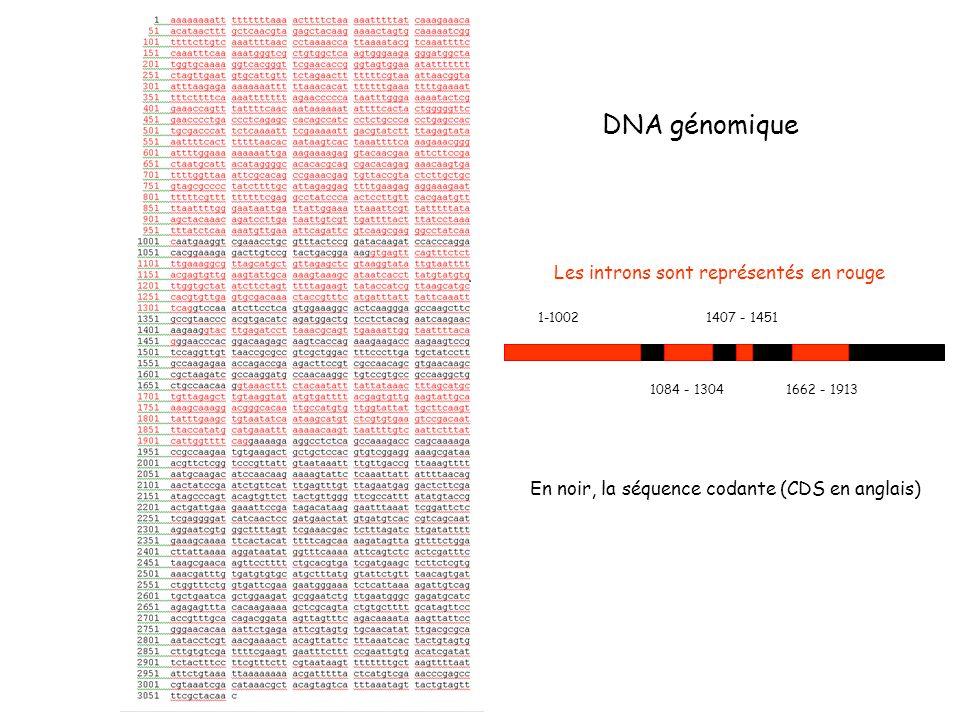 1-1002 1084 - 1304 1407 - 1451 1662 - 1913 Les introns sont représentés en rouge DNA génomique En noir, la séquence codante (CDS en anglais)