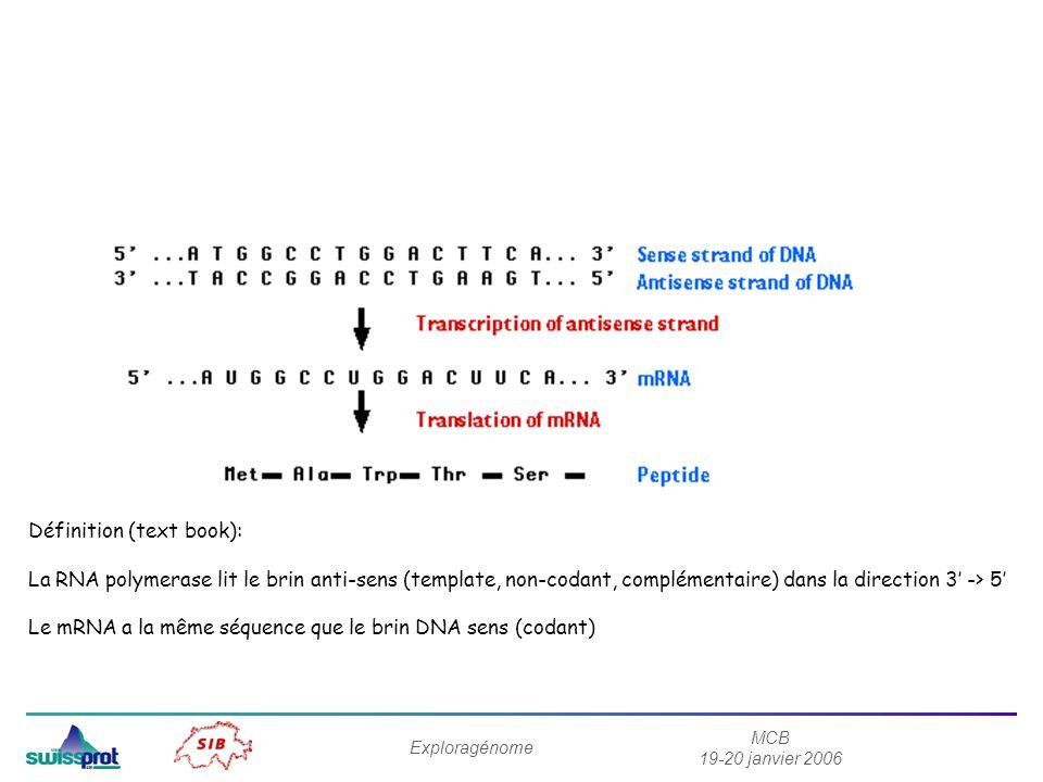 MCB 19-20 janvier 2006 Exploragénome Définition (text book): La RNA polymerase lit le brin anti-sens (template, non-codant, complémentaire) dans la di