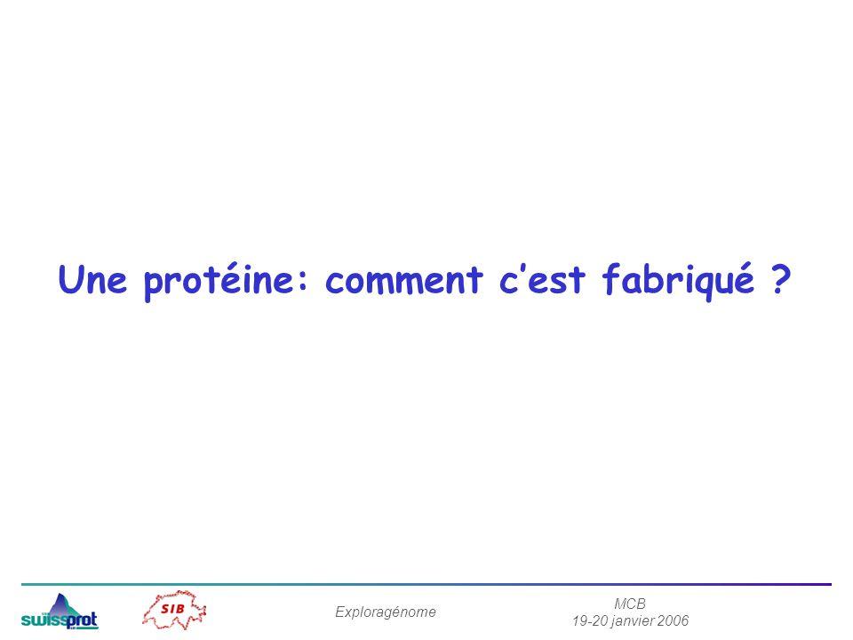 MCB 19-20 janvier 2006 Exploragénome Une protéine: comment cest fabriqué ?