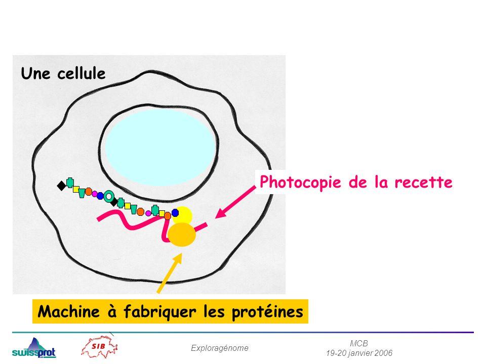 MCB 19-20 janvier 2006 Exploragénome Photocopie de la recette Machine à fabriquer les protéines Une cellule