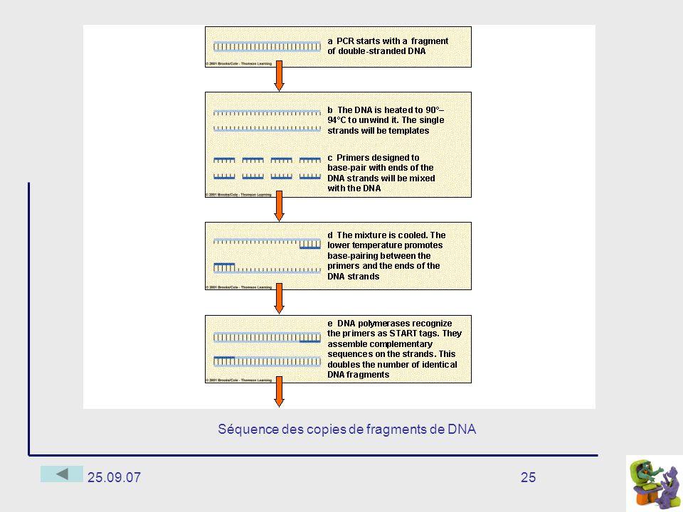25.09.0725 Séquence des copies de fragments de DNA
