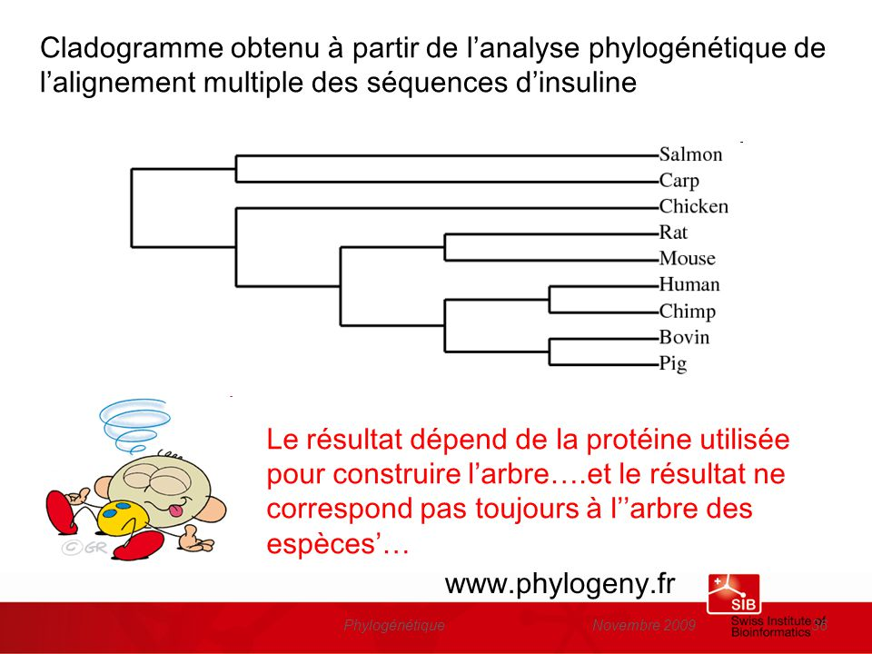 Novembre 2009Phylogénétique36 Cladogramme obtenu à partir de lanalyse phylogénétique de lalignement multiple des séquences dinsuline www.phylogeny.fr