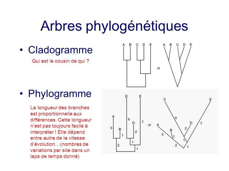 Arbres phylogénétiques Cladogramme Phylogramme La longueur des branches est proportionnelle aux différences. Cette longueur nest pas toujours facile à