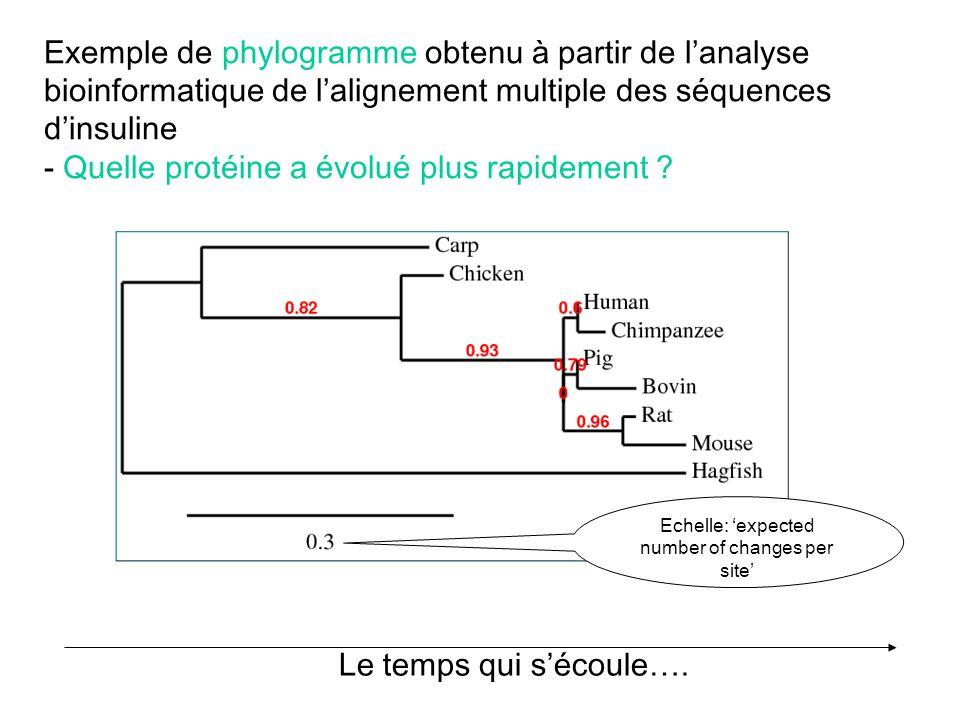 Exemple de phylogramme obtenu à partir de lanalyse bioinformatique de lalignement multiple des séquences dinsuline - Quelle protéine a évolué plus rap