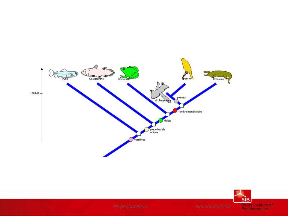 Novembre 2009Phylogénétique36 Cladogramme obtenu à partir de lanalyse phylogénétique de lalignement multiple des séquences dinsuline www.phylogeny.fr Le résultat dépend de la protéine utilisée pour construire larbre….et le résultat ne correspond pas toujours à larbre des espèces…
