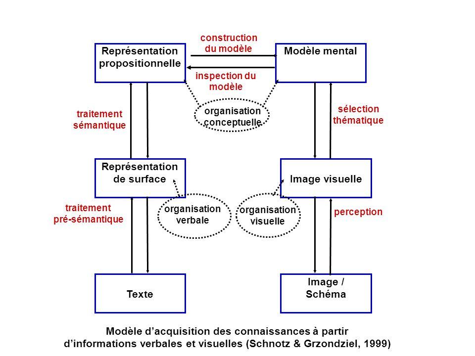 Le modèle de Schnotz : Un modèle intégrateur de la compréhension du texte et de limage Pendant la compréhension du texte, le lecteur se construit une représentation mentale de la structure de surface du texte, il génère une représentation propositionnelle du contenu sémantique, et construit daprès ce texte de base, un modèle mental de la matière décrite.