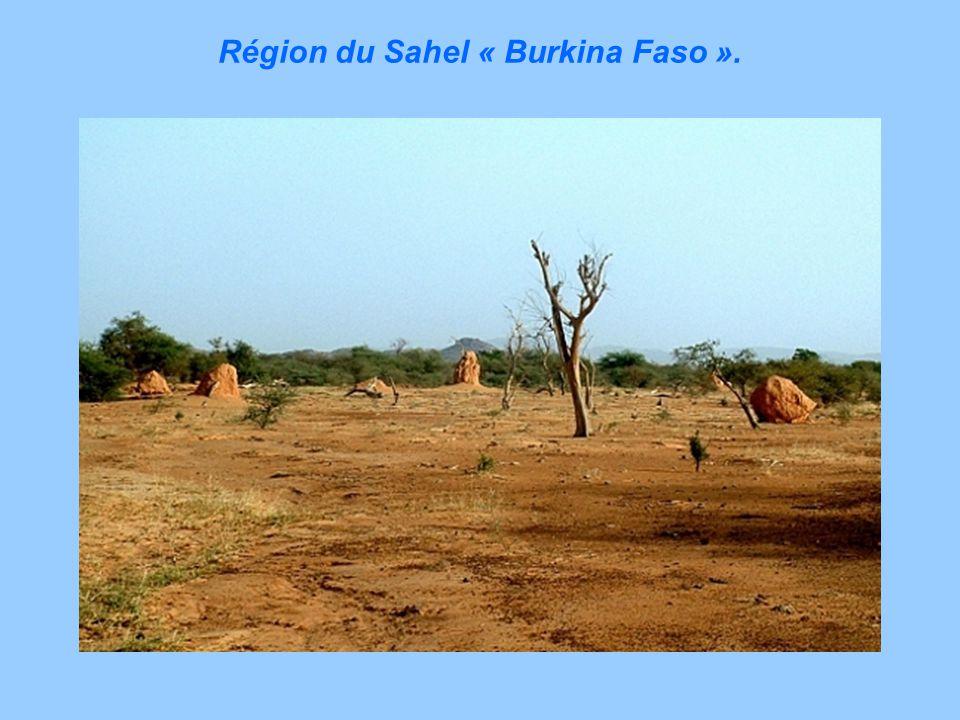 La grande plaine dEtosna « Namibie ».