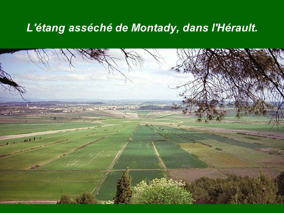 L étang asséché de Montady, dans l Hérault.