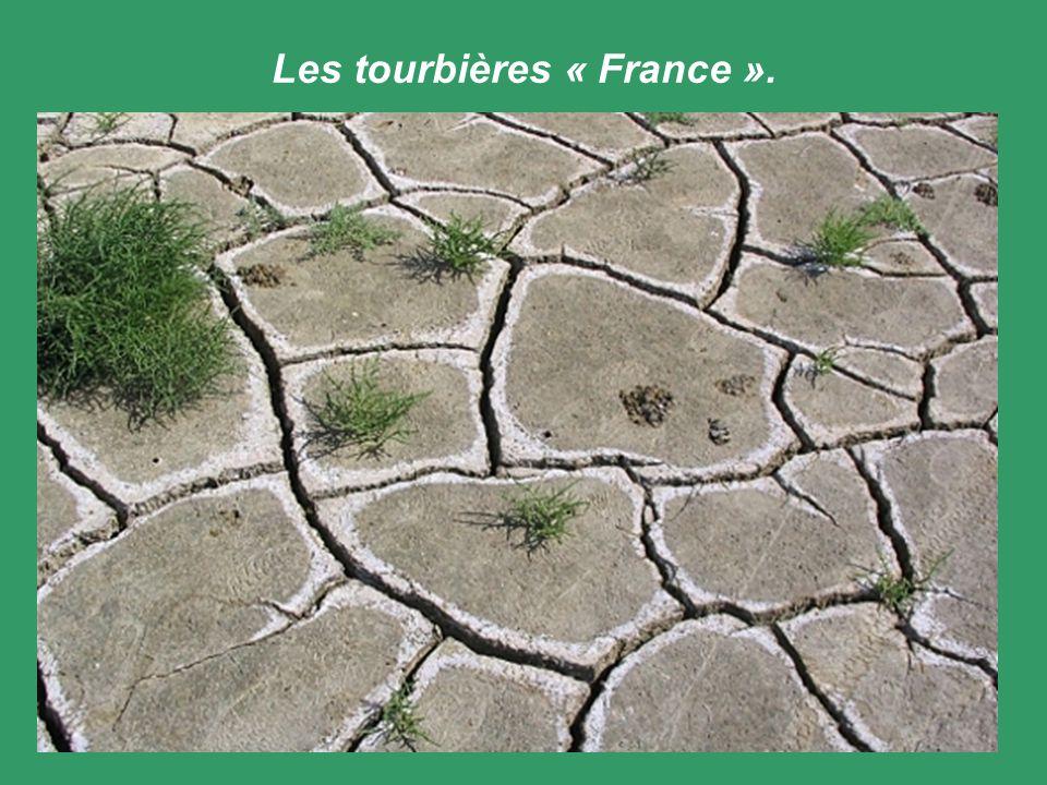 Les tourbières « France ».