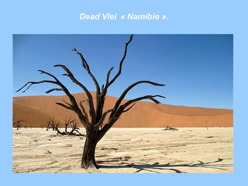 Dead Vlei « Namibie ».