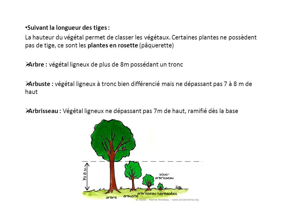 Suivant la longueur des tiges : La hauteur du végétal permet de classer les végétaux. Certaines plantes ne possèdent pas de tige, ce sont les plantes