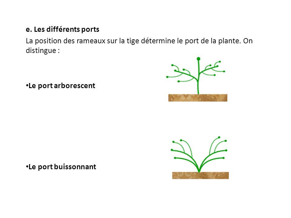 e. Les différents ports La position des rameaux sur la tige détermine le port de la plante. On distingue : Le port arborescent Le port buissonnant
