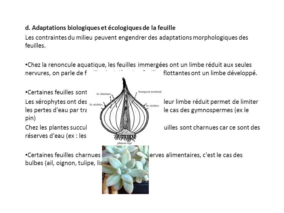 d. Adaptations biologiques et écologiques de la feuille Les contraintes du milieu peuvent engendrer des adaptations morphologiques des feuilles. Chez
