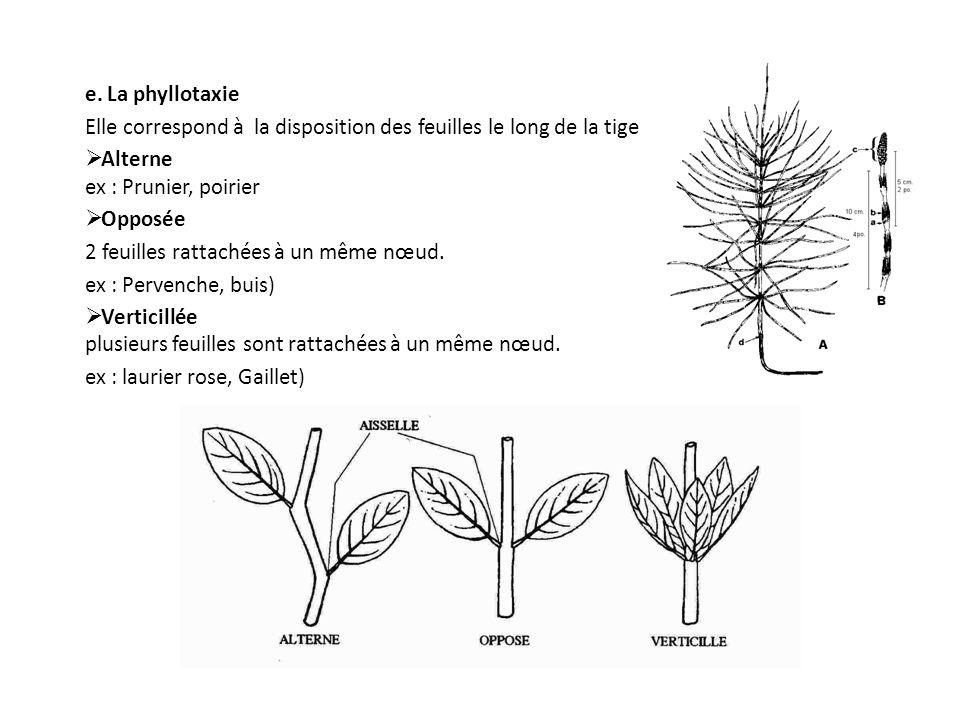 e. La phyllotaxie Elle correspond à la disposition des feuilles le long de la tige Alterne ex : Prunier, poirier Opposée 2 feuilles rattachées à un mê