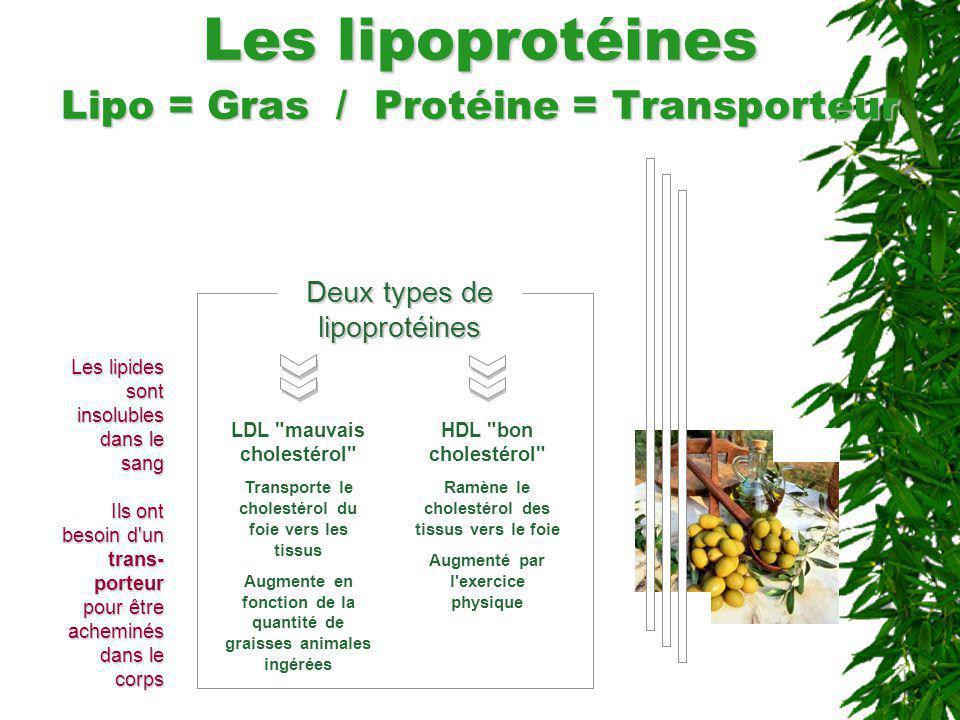Les lipoprotéines Lipo = Gras / Protéine = Transporteur Deux types de lipoprotéines LDL