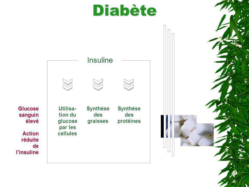 DiabèteInsuline Utilisa- tion du glucose par les cellules Glucose sanguin élevé Action réduite de l'insuline Synthèse des protéines Synthèse des grais