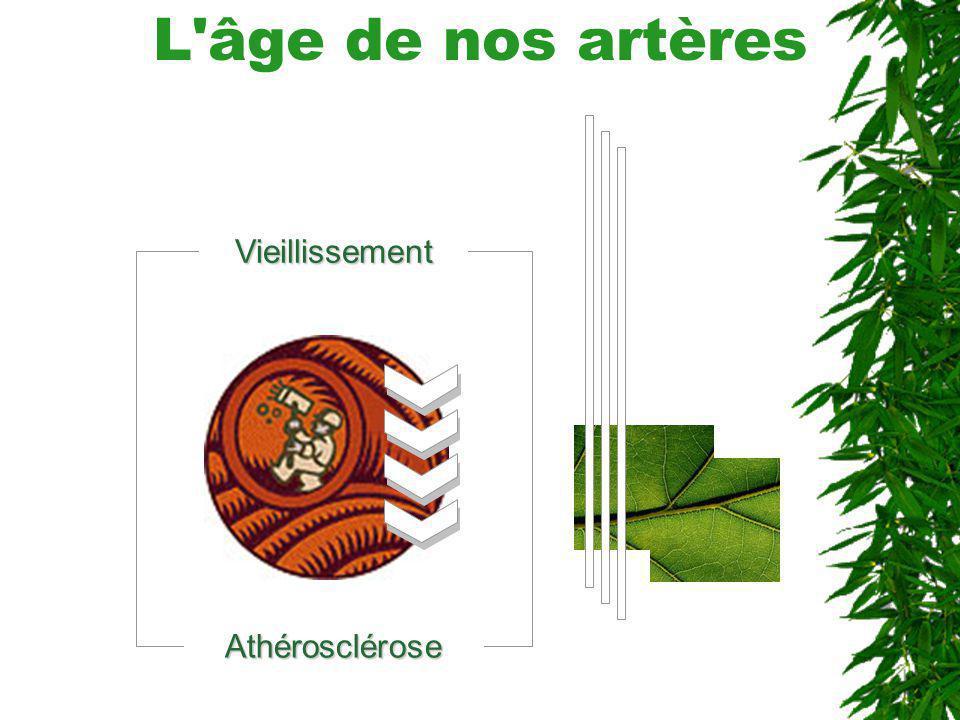 L'âge de nos artèresVieillissement Athérosclérose