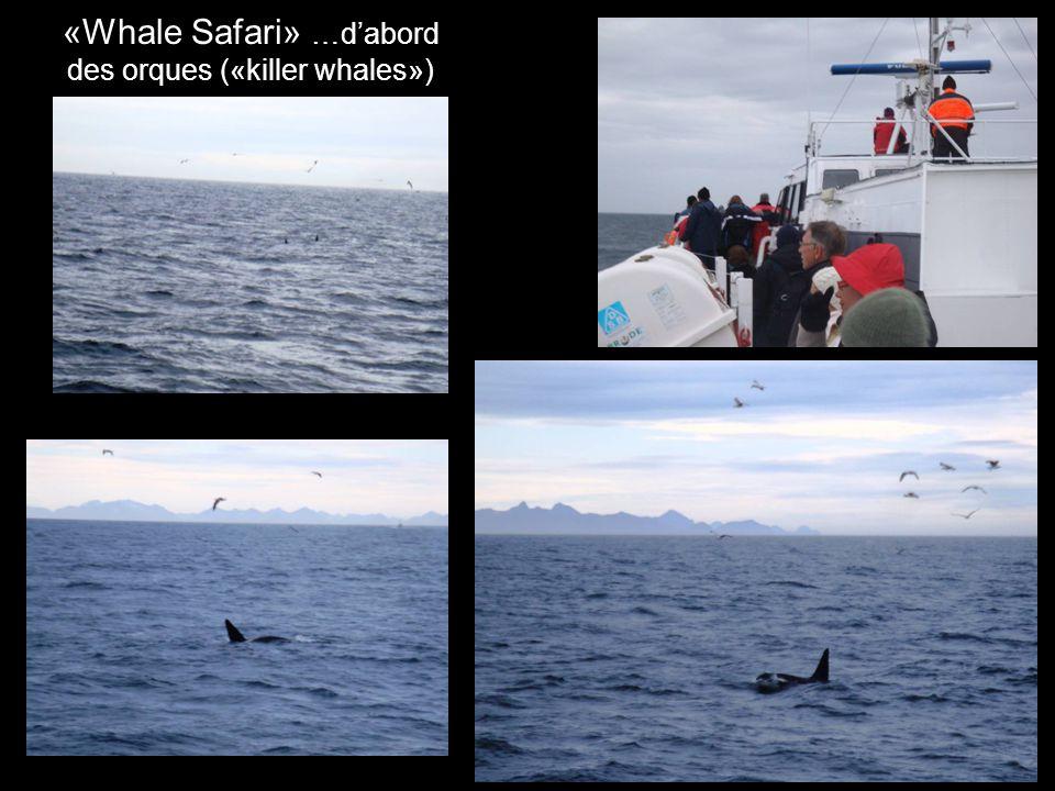 «Whale Safari» …dabord des orques («killer whales»)