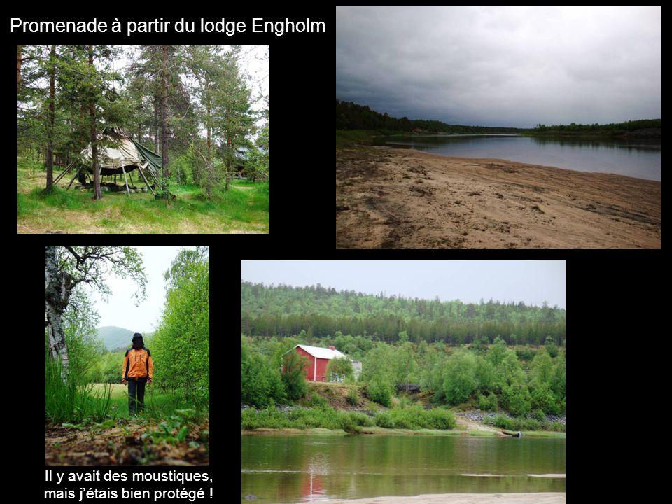 Promenade à partir du lodge Engholm Il y avait des moustiques, mais jétais bien protégé !