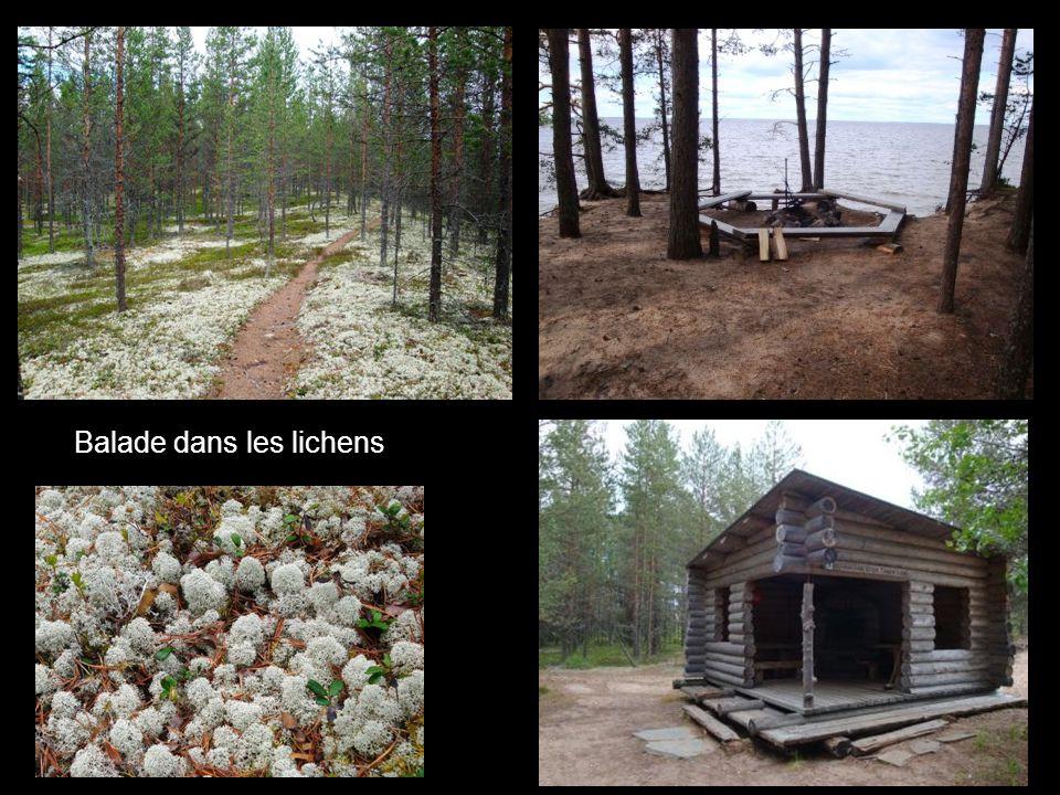 Balade dans les lichens