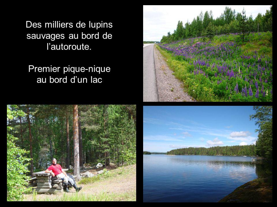 Ballade (26 km) en foret, vers Vaattunkiköngäs (!)