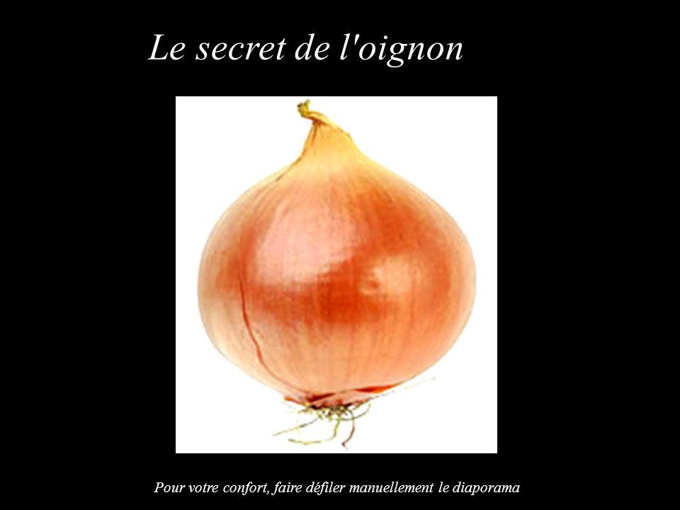 Le secret de l oignon Pour votre confort, faire défiler manuellement le diaporama