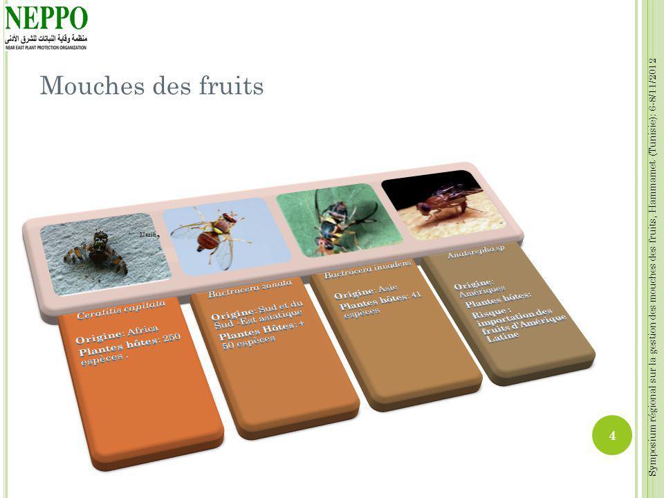 Symposium régional sur la gestion des mouches des fruits, Hammamet (Tunisie): 6-8/11/2012 Mouches des fruits Mazih, 4