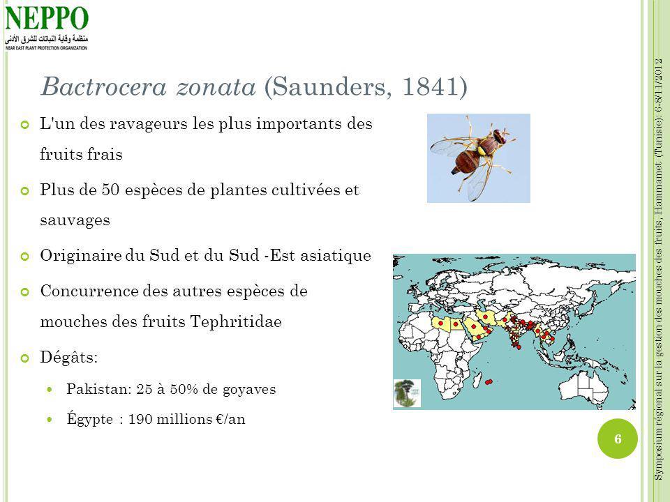 Symposium régional sur la gestion des mouches des fruits, Hammamet (Tunisie): 6-8/11/2012 Bactrocera zonata (Saunders, 1841) L'un des ravageurs les pl