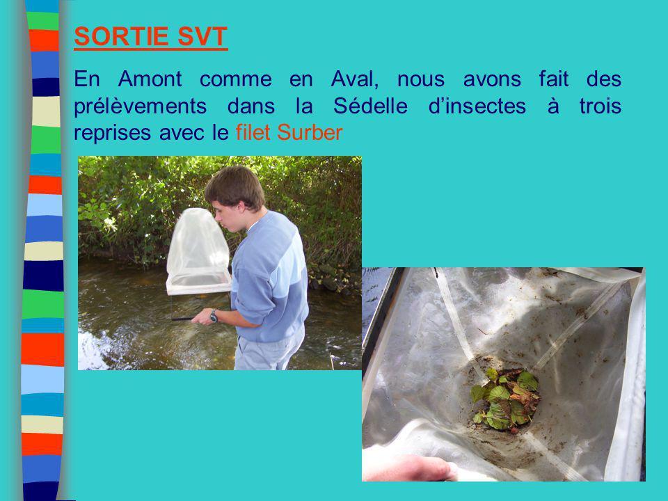 SORTIE SVT En Amont comme en Aval, nous avons fait des prélèvements dans la Sédelle dinsectes à trois reprises avec le filet Surber